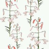 Безшовный цветочный узор тропических белых лилий цветки вручают покрашено иллюстрация вектора
