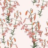 Безшовный цветочный узор тропических оранжевых лилий цветки вручают покрашено Изолированный на свете - розовой предпосылке бесплатная иллюстрация