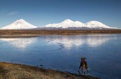 Безыменные озеро и собака стоковое фото rf