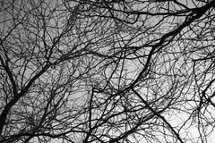 Безлистная предпосылка ветвей дерева абстрактная в черно-белом Стоковая Фотография RF