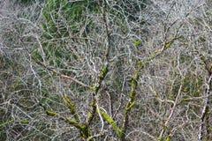 Безлистное дерево в древесинах весны стоковое изображение rf