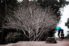 Безлистное дерево и голубой зонтик Стоковое Изображение