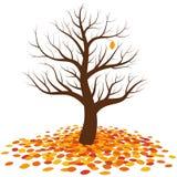 Безлистное падение лист осени дерева бесплатная иллюстрация