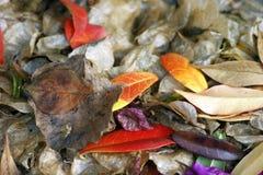Безлистной листва variegated осенью под ногами Стоковые Изображения RF