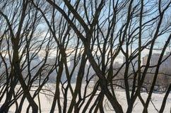 Безлистные ветви дерева против голубого неба Стоковое фото RF