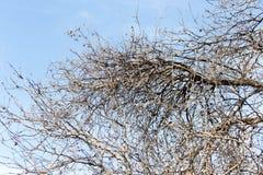 Безлистные ветви дерева против голубого неба Стоковые Фото