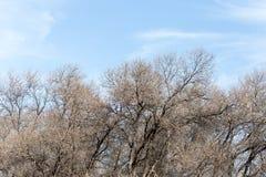 Безлистные ветви дерева против голубого неба Стоковая Фотография RF