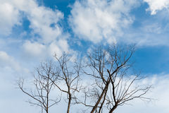 Безлистные ветви на небе Стоковые Изображения RF