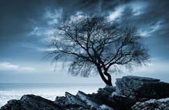 Безлистный силуэт дерева на скалистом морском побережье Стоковая Фотография RF
