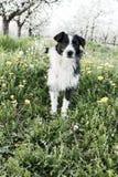 Бездомная собака в яблоневом саде Стоковая Фотография
