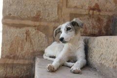 Бездомная собака в Jalsaimer, Индии Стоковое фото RF