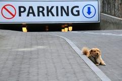 Бездомная собака и подземная автостоянка Стоковая Фотография
