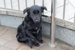 Бездомная собака сидит на мостоваой Стоковые Фотографии RF