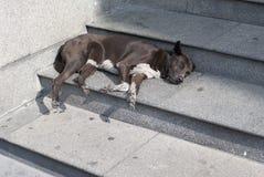 Бездомная собака спать на обочине Стоковые Изображения RF