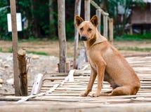 Бездомная собака Стоковая Фотография