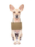 Бездомная собака Стоковые Изображения RF
