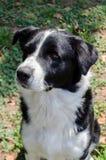 Бездомная собака Стоковое фото RF