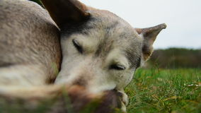 Бездомная собака сток-видео