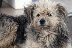 Бездомная shaggy собака Стоковые Изображения
