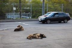 2 бездомной собаки лежа в улице Стоковое Изображение RF