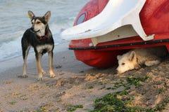 2 бездомной собаки на пляже Стоковые Фото