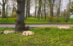 3 бездомной собаки на сне улицы Стоковые Фото