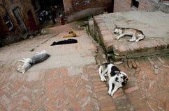 Бездомные собаки Стоковое Фото