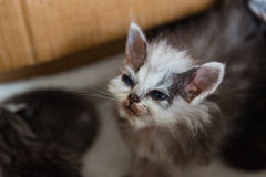 Бездомный котенок в коробке стоковое изображение rf