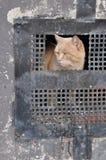 Бездомный кот стоковое изображение rf
