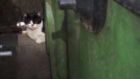 Бездомный рассеянный кот лежа за пакостным контейнером отброса - крупным планом акции видеоматериалы