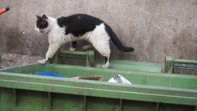 Бездомный рассеянный кот идет вдоль пакостного контейнера отброса - крупного плана видеоматериал