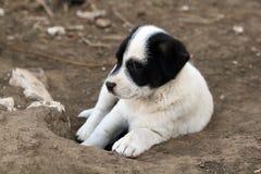 бездомный щенок Стоковое Фото