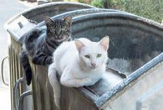 2 бездомных кота лежа на контейнере отброса, смотря Стоковое фото RF