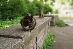 2 бездомных кота сидя на камне в парке лета Стоковая Фотография