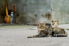 2 бездомных кота Стоковое фото RF