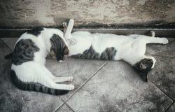 2 бездомных кота Стоковое Фото