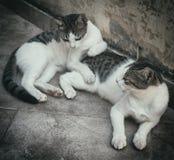 2 бездомных кота Стоковые Изображения