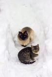 2 бездомных кота Стоковые Фото