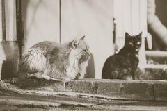 2 бездомных кота Стоковая Фотография