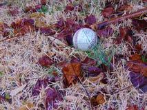 Бейсбол в траве среди мертвых листьев стоковое фото rf