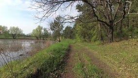 Беларусь Весна Лес на холме в периоде прилива сток-видео