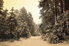 Беларусь, Grodno, лес Snowy fairy вокруг озера Molochnoe стоковые фотографии rf
