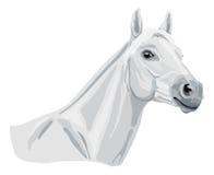 Белая аравийская лошадь иллюстрация штока