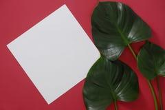 Белая бумага модель-макета с космосом для текста или изображение на красной предпосылке и тропических листьях стоковые фотографии rf