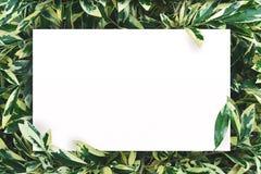 Белая бумага на зеленой предпосылке лист с разбивочным открытым космосом для текста или продукта монтажа Стоковые Фотографии RF