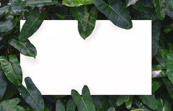 Белая бумага на зеленой предпосылке лист с разбивочным открытым космосом для текста или продукта монтажа Стоковые Изображения RF