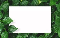 Белая бумага на зеленой предпосылке лист с разбивочным открытым космосом для текста или продукта монтажа Стоковое фото RF