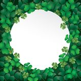 Белая бумага на листьях shamrock Стоковое Изображение