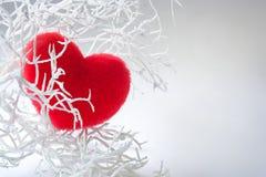 Белая ветвь с красным пушистый сердцем над белизной Стоковые Изображения RF