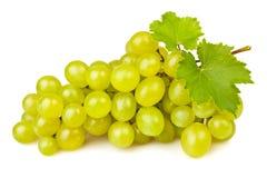 Белая виноградина Стоковое Изображение